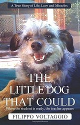 The Little Dog That Could